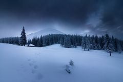 在冬天山的风景 积雪的高冷杉和不通的随风飘飞的雪看法  库存照片