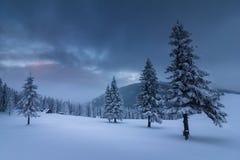 在冬天山的风景 积雪的高冷杉和不通的随风飘飞的雪看法  图库摄影