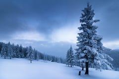在冬天山的风景 积雪的高冷杉和不通的随风飘飞的雪看法  库存图片