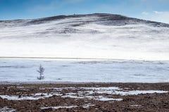 在冬天山背景的一棵一点树 免版税库存图片