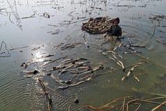 在冬天工作者在池塘赢得他们的硬币 免版税库存图片