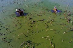 在冬天工作者在池塘赢得他们的硬币 库存图片