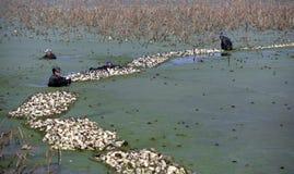 在冬天工作者在池塘赢得他们的硬币 免版税图库摄影