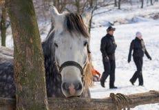 在冬天开放摊位的哀伤的马 免版税库存图片