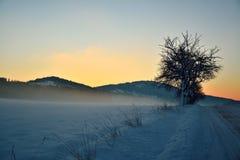 在冬天日出期间的树 免版税库存图片