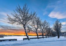 在冬天日落的树 库存照片