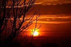 在冬天日落的结构树影子 免版税库存照片