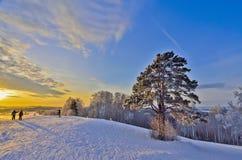 在冬天日落的金黄光芒的孤独的杉木 库存图片
