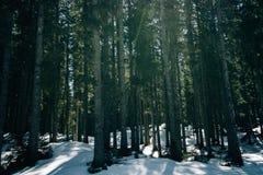在冬天期间,一个厚实的森林的美丽的射击 免版税库存照片