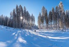 在冬天期间,一个厚实的森林的美丽的射击 免版税库存图片
