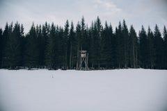 在冬天期间,一个厚实的森林的美丽的射击 库存图片