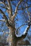 在冬天期间,在蓝天的树枝 免版税库存照片