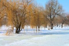 在冬天期间,蓝天的湖 免版税图库摄影