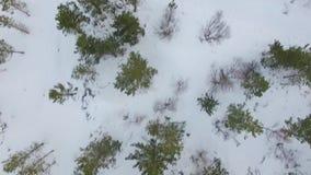 在冬天期间,一个小森林的空中英尺长度在冰岛 股票视频