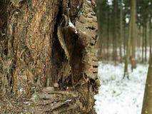 在冬天期间,一棵树的特写镜头 免版税库存图片