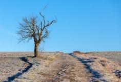 在冬天期间,与一条道路的偏僻的树 免版税库存图片