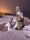 在冬天期间,在海滩的老树桩 免版税库存照片