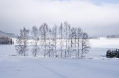 在冬天期间,树 免版税图库摄影
