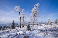 在冬天期间,树 库存照片