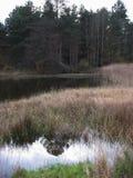 在冬天期间,湖 免版税库存图片
