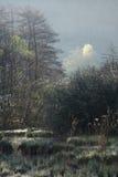 在冬天期间,薄雾美好的大气在狂放的沼泽的在阿尔萨斯,法国 免版税库存照片
