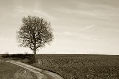 在冬天期间,经典看法,一棵树 图库摄影