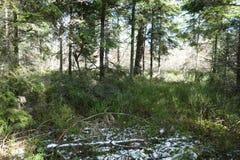 在冬天期间,绿色森林 免版税图库摄影