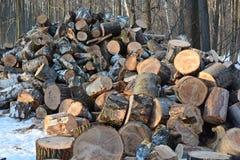 在冬天木头的击倒的树 免版税库存图片