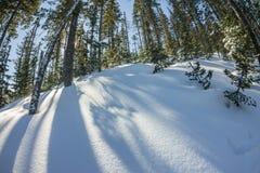 在冬天树的神奇冬天风景山盖了雪 免版税库存图片