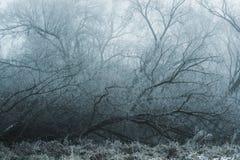 在冬天树落入雾 免版税图库摄影