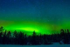 在冬天森林上的明亮的北极光 免版税库存图片