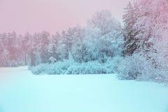 在冬天森林全景的阳光 全景冬天童话 免版税库存图片