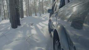 在冬天森林公路的汽车乘驾 在一条积雪的路的一辆汽车在树中 库存照片