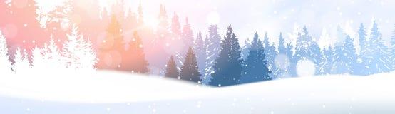 在冬天森林发光的雪的天在阳光森林地风景白色斯诺伊杉树森林背景下 免版税库存图片