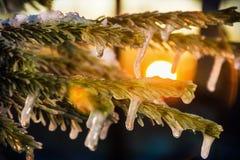 在冬天森林和明亮的太阳的冻结的树枝在日落 免版税库存图片