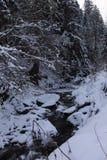 在冬天森林喀尔巴汗里 很多雪,树在雪包了  库存照片