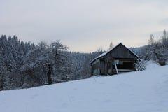 在冬天森林喀尔巴汗里 很多雪,树在雪包了  免版税图库摄影