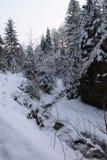 在冬天森林喀尔巴汗里 很多雪,树在雪包了  免版税库存照片