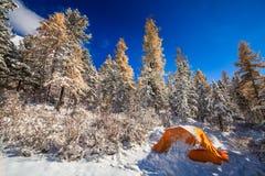 在冬天森林旅游阵营的橙色帐篷在多雪的森林里 免版税库存照片