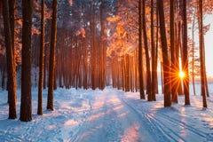 在冬天森林晚上太阳的雪道路通过树发光 太阳照亮与霜的树 免版税库存照片