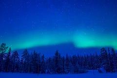 在冬天森林的北极光 免版税库存照片