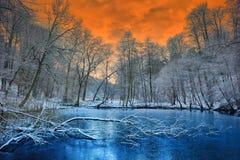 在冬天森林的壮观的橙色日落 免版税库存照片