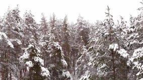 在冬天森林的寄生虫飞行 股票视频