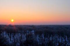 在冬天森林的日落 库存图片