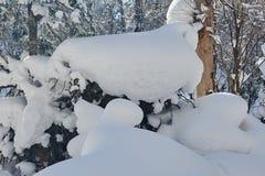 在冬天森林的未受影响的雕塑雪 图库摄影
