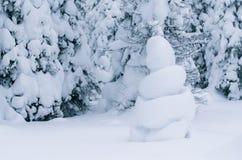 在冬天森林被覆盖的杉木的雪形象 库存图片