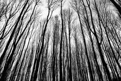 在冬天森林里分支梯度 免版税库存图片