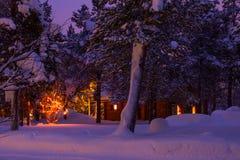 在冬天森林野营的清早 库存图片