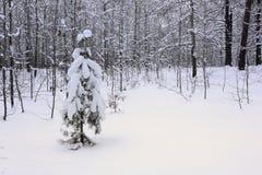 在冬天森林 免版税库存照片