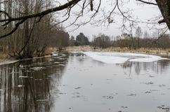 在冬天横向的天鹅 库存照片